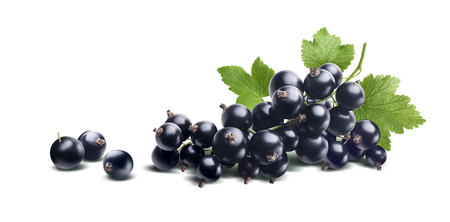 Black currant branch fresh isolated on white background as package design element Foto de archivo