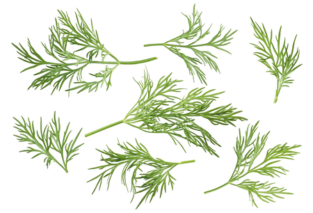 included: Dill herb set options path included isolated on white background Stock Photo