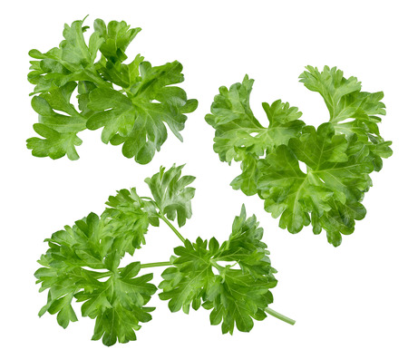 included: Parsley herb set path included isolated on white background
