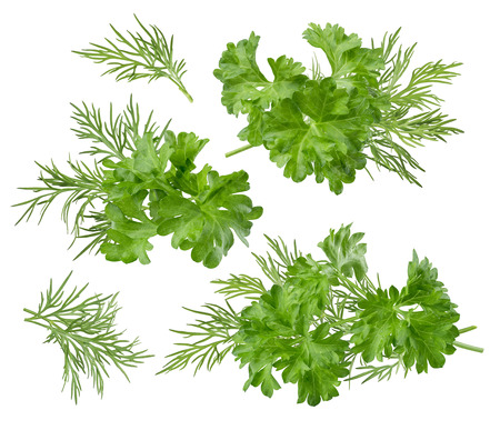 included: Herb dill parsley set path included isolated on white background