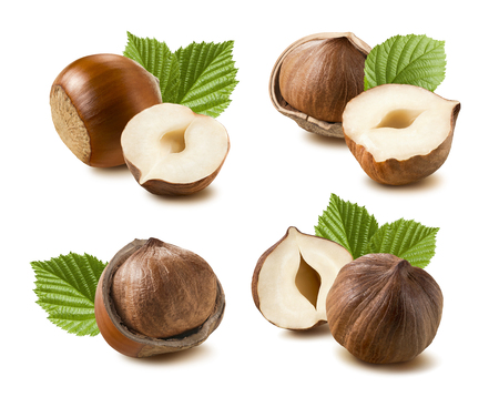Hazelnut nut leaf set selection isolated on white background 7 as package design element