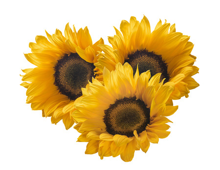 Sunflower group 3 isolated on white background as package design element