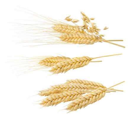 小麦オーツ麦の穂セット パッケージ デザイン要素として白い背景に分離された 4