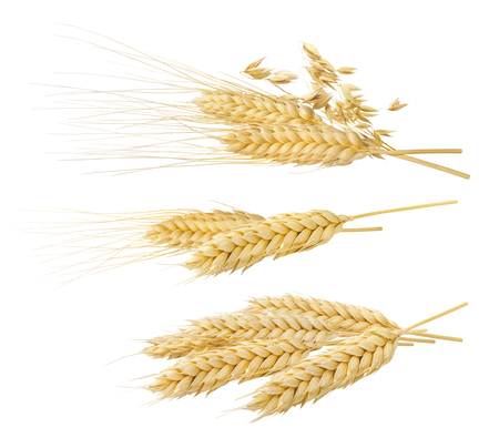 Wheat oat ears set 4 isolated on white background as package design element Фото со стока