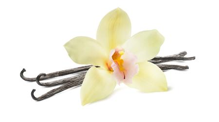 Bâton de vanille et fleur isolé sur fond blanc comme élément de design Banque d'images
