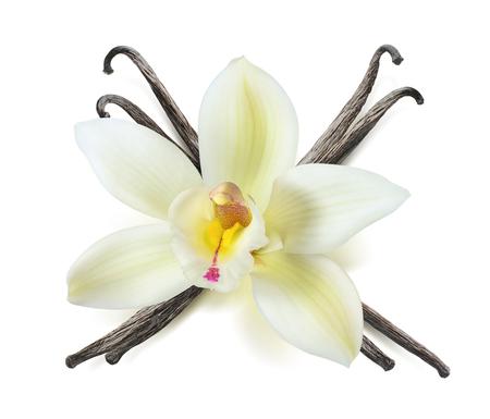 패키지 디자인 요소로 흰색 배경에 고립 된 바닐라 꽃 깍 스톡 콘텐츠
