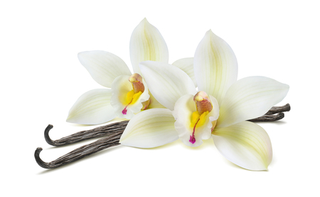 Double vanilla flower pod isolated on white background as package design element