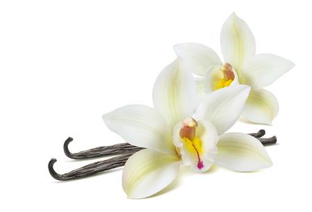 패키지 디자인 요소로 흰색 배경에 고립 된 더블 바닐라 꽃 2 스톡 콘텐츠