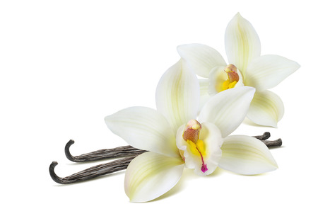 Double vanilla flower 2 isolated on white background as package design element Banco de Imagens - 77906310