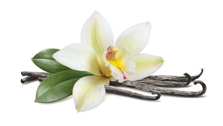 白い背景で隔離の葉水平ポッドとバニラ 写真素材