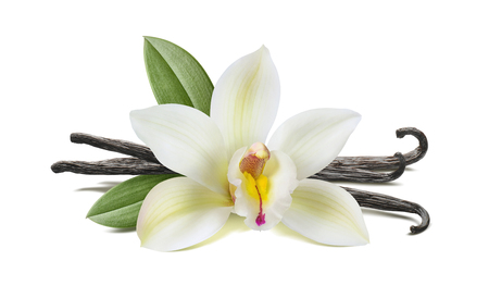 Vanilla flower, pods, leaves isolated on white background, horizontal composition 스톡 콘텐츠