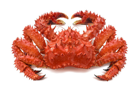 Roodbruine koningskrab 2 die op witte achtergrond als element van het pakketontwerp wordt geïsoleerd