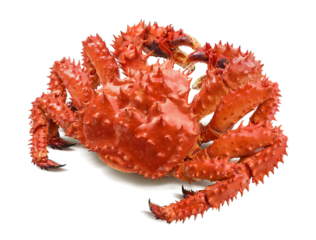 Kamchatka king crab isolated on white background, back view