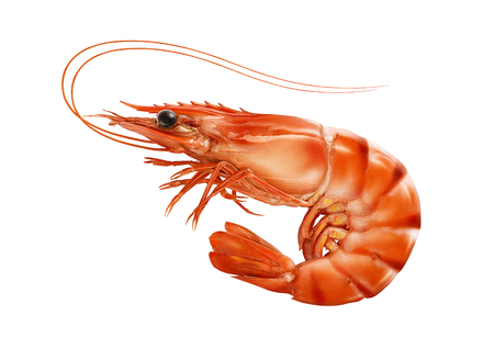 Red cooked prawn or tiger shrimp isolated on white background as package design element 스톡 콘텐츠