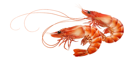 Double red prawns or tiger shrimps isolated on white background, horizontal composition