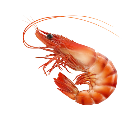 Cooked prawn or tiger shrimp isolated on white background as package design element