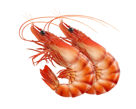 Red prawns or tiger shrimps isolated on white backround, square composition for package design