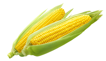 Double sweet corn ears isolated on white background as package design element Imagens