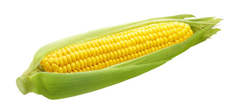 Fresh ear of corn isolated on white background as package design element