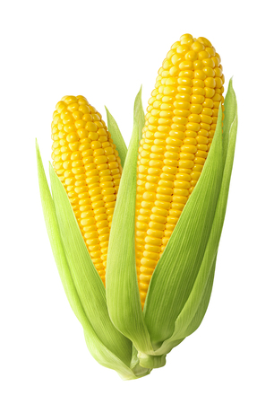 Sweet corn ears isolated on white background as package design element Stock Photo