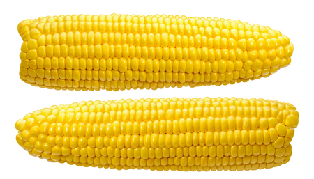 2 corn ears no leaves isolated on white background as package design element