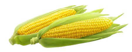 Maïskolven of korenaren op witte achtergrond als element dat van het pakketontwerp worden geïsoleerd Stockfoto