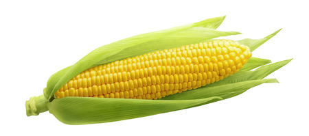 Single ear of corn isolated on white background as package design element 스톡 콘텐츠