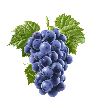 Blue grapes isolated on white background. Vertical composition. For package design