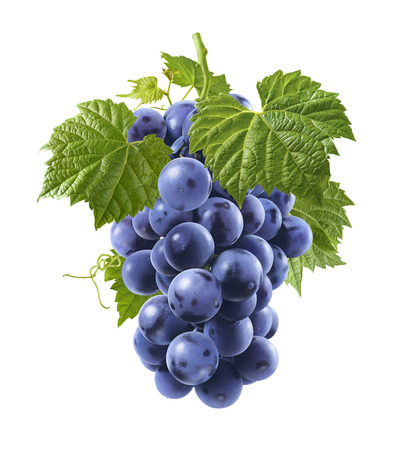 Bunch of fresh blue grapes isolated on white background as package design element