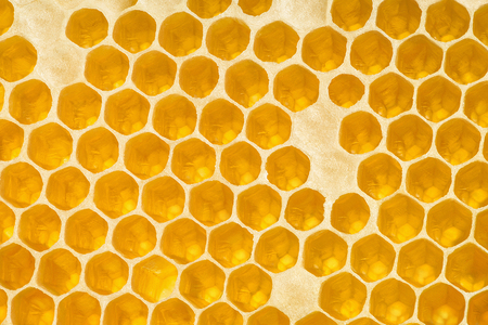 Golden background texture. Horizontal section of wax honeycomb Stock Photo - 98434065