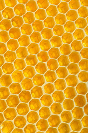 Yellow background texture. Vertical section of wax honeycomb Stock Photo - 98408516
