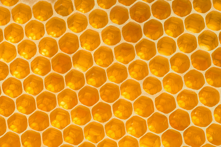 Yellow honeycomb background texture. Honey elements for decoration