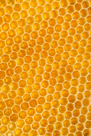 Yellow hexagon background texture. Vertical section of wax honeycomb Stock Photo