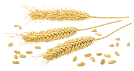 Wheat ears and grains isolated on white background with clipping path. Horizontal composition for cereal package design
