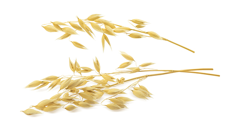 Oat ears isolated on white background. With clipping path for package design
