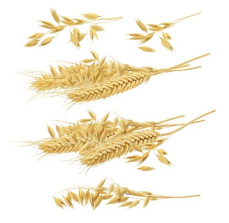 Wheat oat set isolated on white background. Stock Photo