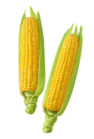 2 corn cobs with green leaves isolated on white background. Package design element with clipping path Stock Photo