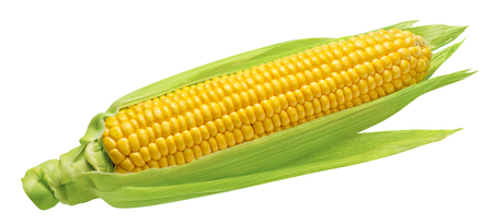 Mazorca de maíz con hojas verdes aisladas sobre fondo blanco. Elemento de diseño de paquete con trazado de recorte