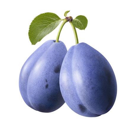 Prunes bleues sur branche isolé sur fond blanc.