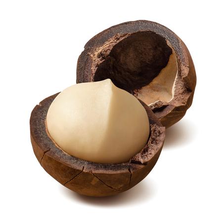 Single macadamia nut isolated on white