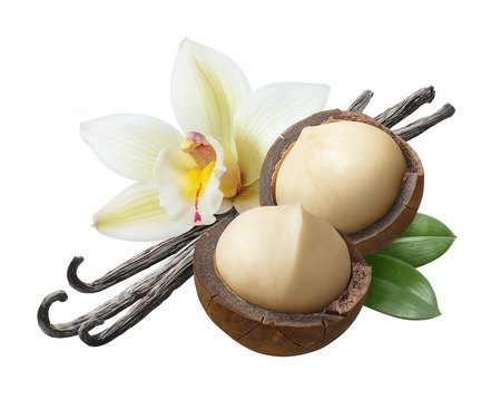 Vanilla flowers, pods and leaves with macadamia nuts isolated on white