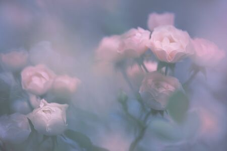Verschwommene transparente Blumen Standard-Bild