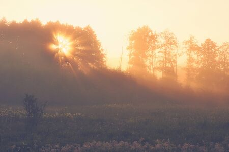 Sunrise in the country. Sun shining through a tree. Foggy summer morning.