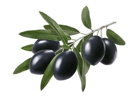 Langer Zweig mit schwarzen Oliven isoliert auf weiß Standard-Bild