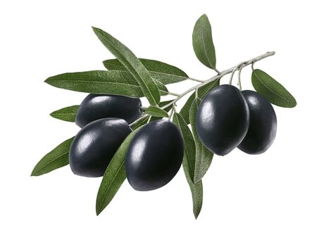 Long branch with black olives isolated on white Zdjęcie Seryjne