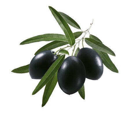 Schwarze Oliven auf Zweig isoliert auf weiß