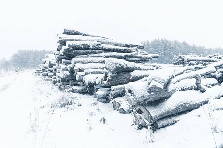 Stack of logs in front of pine forest. Side view. Winter time, snowfall. Horizontal layout for seasonal stories