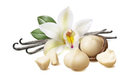 Vanilla flower and pods with macadamia nuts isolated on white Фото со стока
