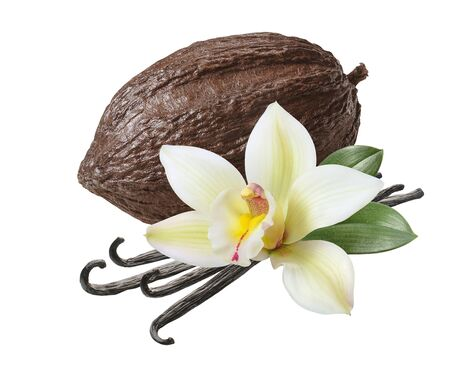Cocoa pod and vanilla beans with flower isolated on white