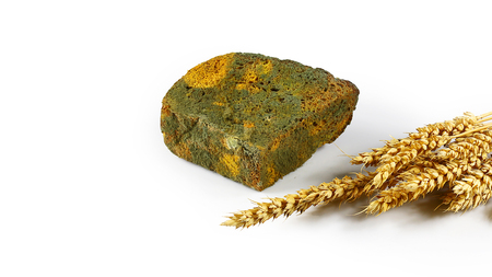 half a loaf of mouldy rye bread and sprouts of wheat isolated on white background, concept of inedible products, Flat lay. Copy space.